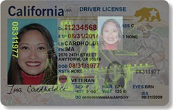 Image of REAL ID Driver License shown under ultraviolet light.